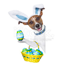 stock-photo-37456072-funny-easter-dog